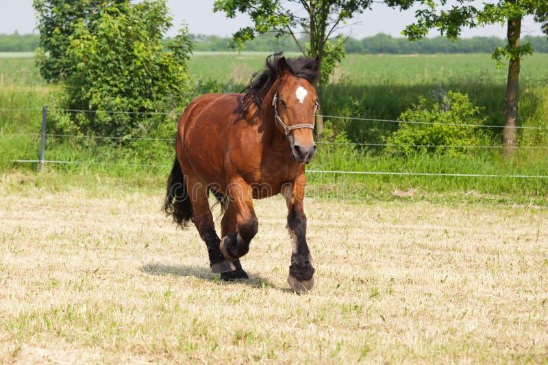 Cavalo de carro no prado fotografia de stock royalty free