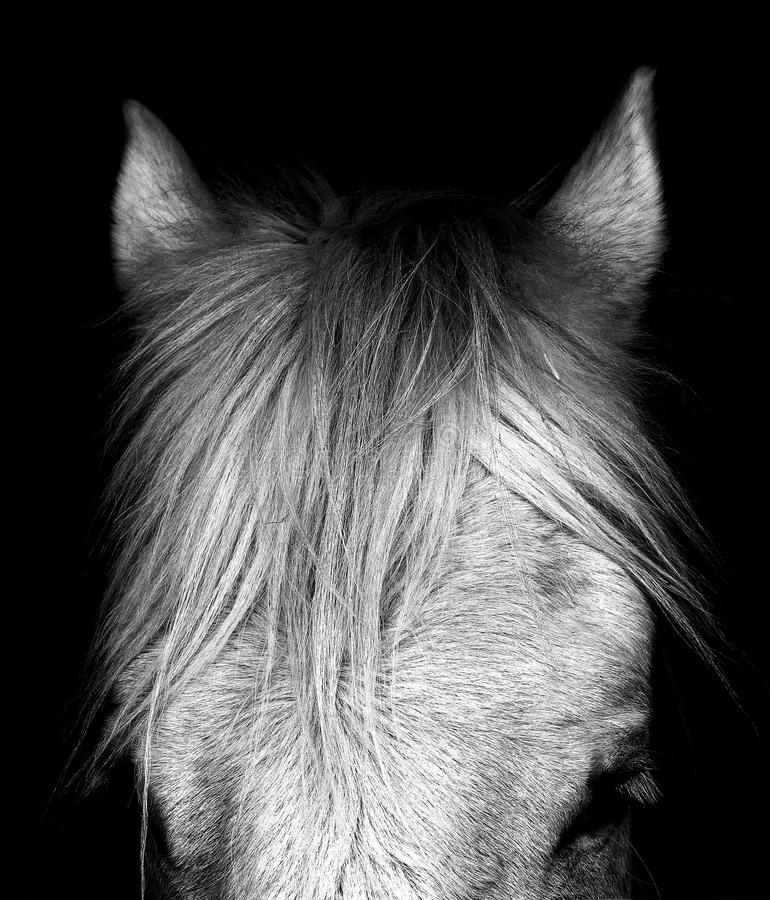 Cavalo de condado - Norfolk Reino Unido fotografia de stock royalty free