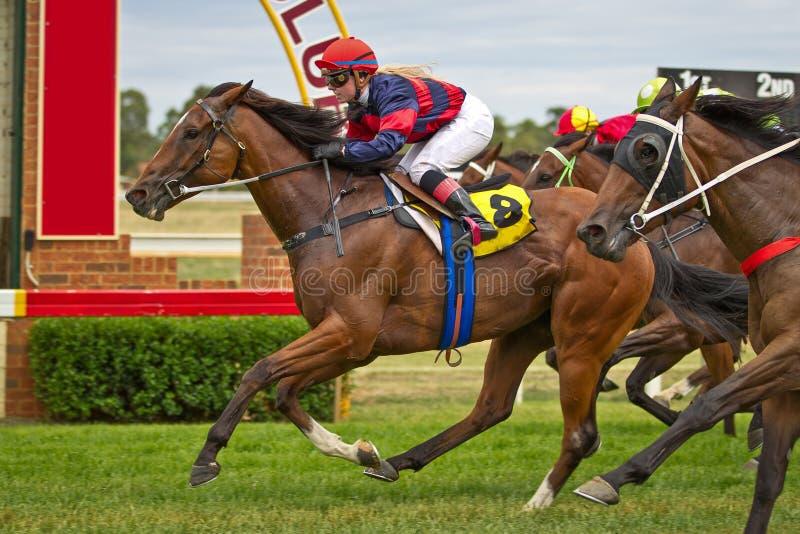 Cavalo de corrida de vencimento e jóquei fêmea em Dubbo NSW Austrália fotografia de stock royalty free