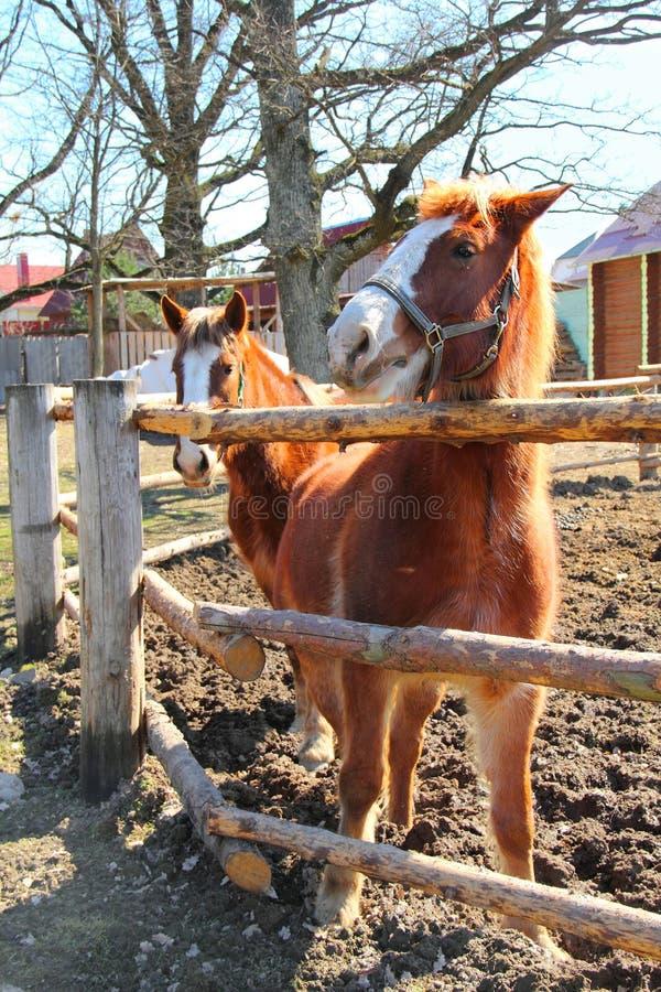 Cavalo de dois jovens no prado imagem de stock