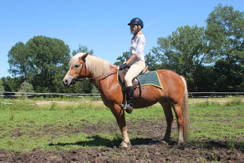 Cavalo de equitação imagens de stock royalty free