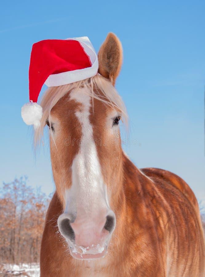 Cavalo de esboço belga louro que veste um chapéu de Santa fotos de stock royalty free