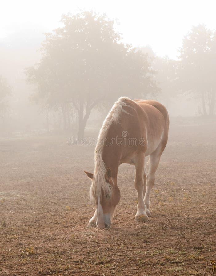 Cavalo de esboço belga na névoa pesada imagem de stock royalty free