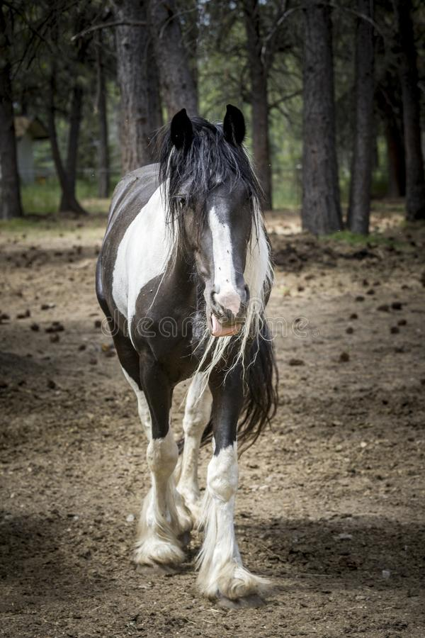 Cavalo de esboço em um campo foto de stock