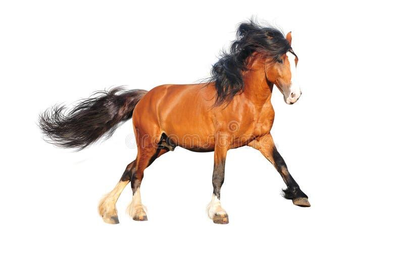 Cavalo de esboço isolado fotografia de stock