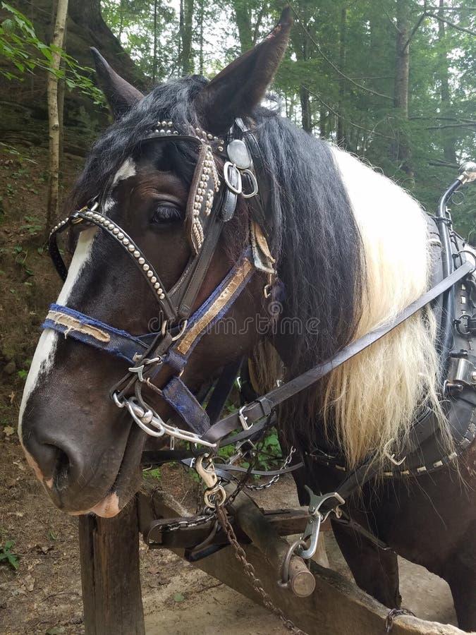 Cavalo de esboço que espera para ir trabalhar imagem de stock