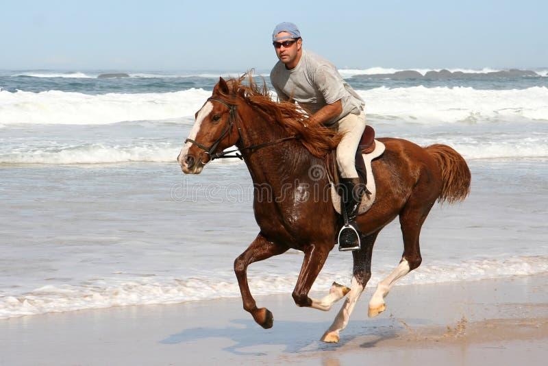 Cavalo de galope com cavaleiro imagens de stock
