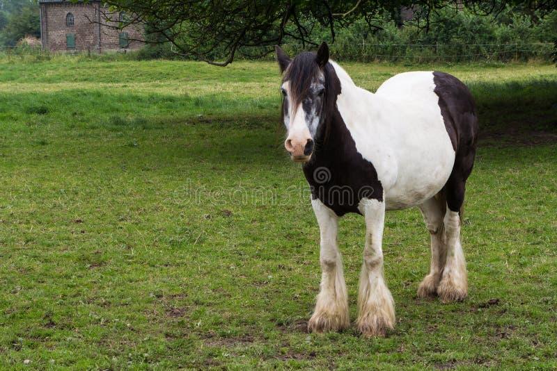 Cavalo de Gypse imagem de stock