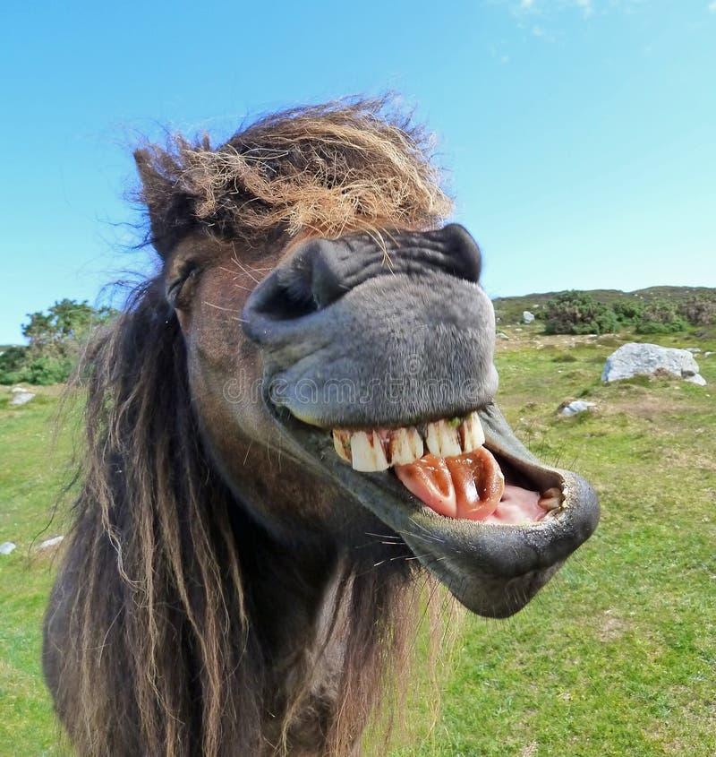 Cavalo de riso imagem de stock