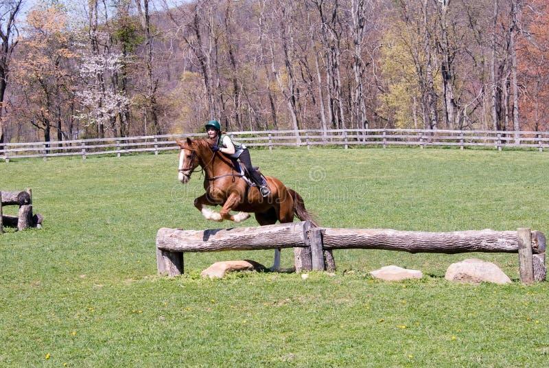 Cavalo de salto no campo fotografia de stock royalty free