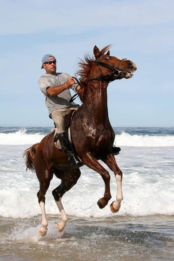 Cavalo de salto no mar fotografia de stock