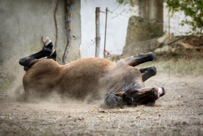 Cavalo de sorriso que dá-se um bom traquinagem na terra imagem de stock royalty free