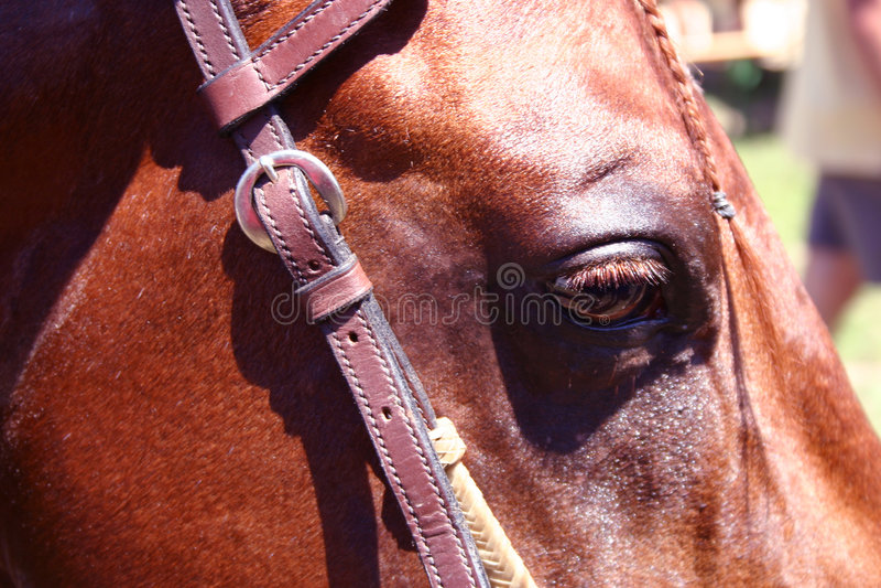 Cavalo de um quarto fotos de stock