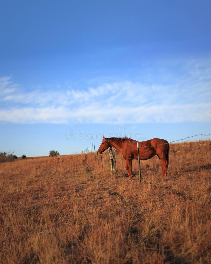 Cavalo de um quarto no rancho imagens de stock