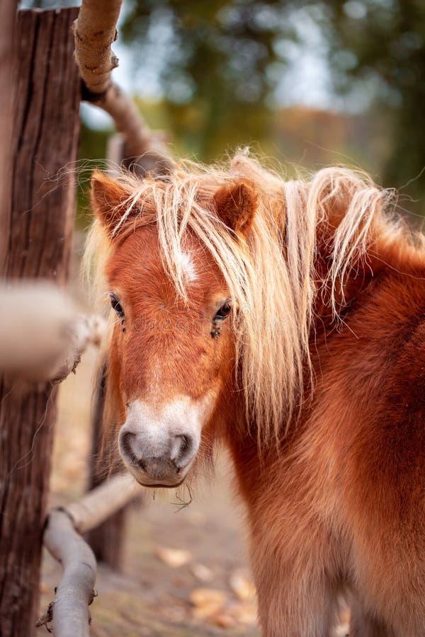 Cavalo diminuto da testa engraçada outdoors fotografia de stock