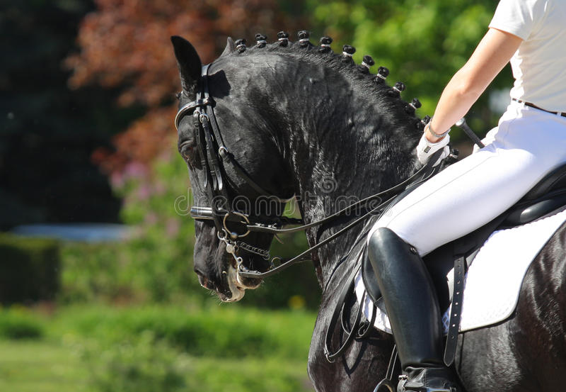 Cavalo do Dressage fotos de stock