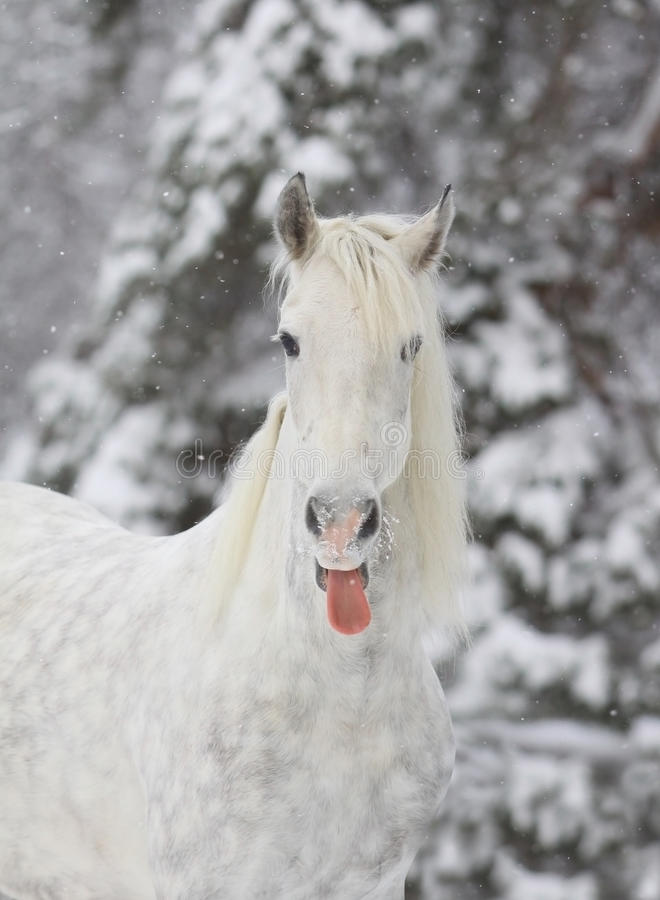 Cavalo do inverno fotos de stock royalty free