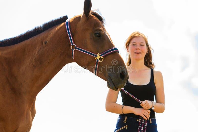 Cavalo do marrom das trocas de carícias da moça do jóquei foto de stock