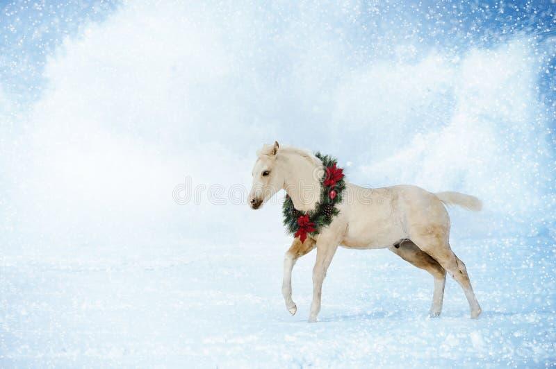 Cavalo do Natal imagem de stock