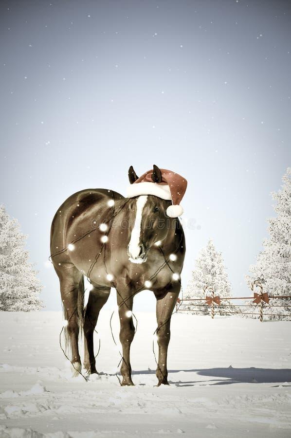 Cavalo do Natal fotografia de stock royalty free