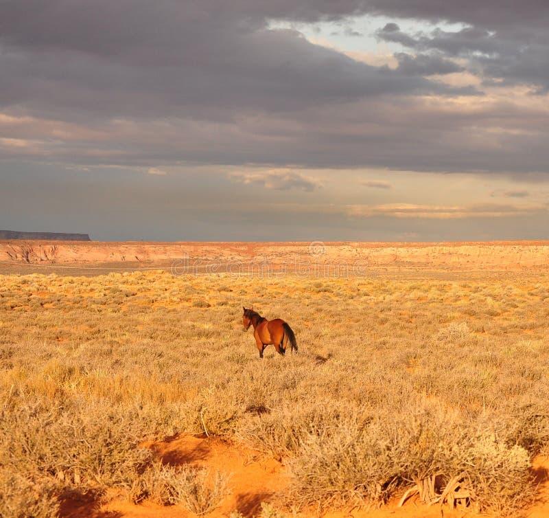 Cavalo do Navajo fotografia de stock royalty free