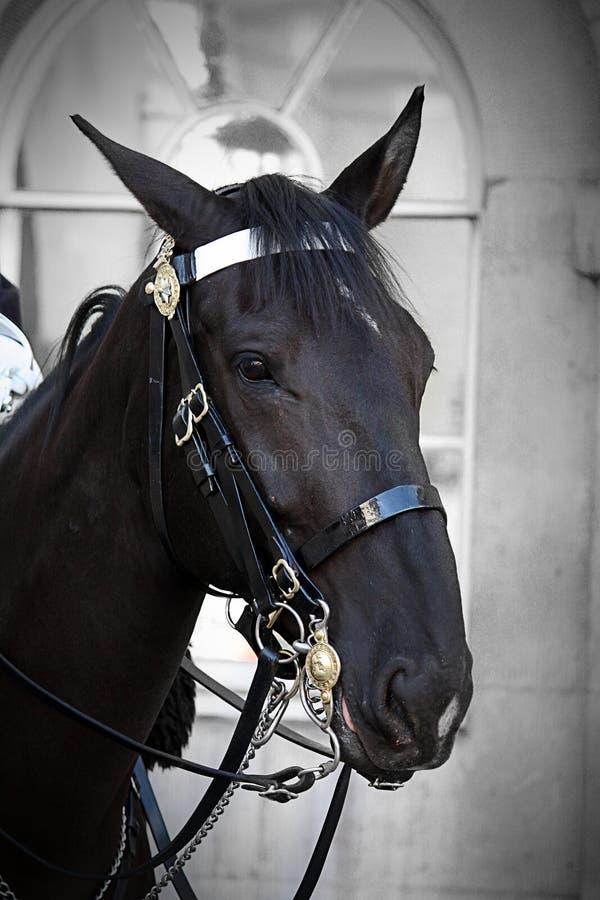 Cavalo do protetor imagem de stock