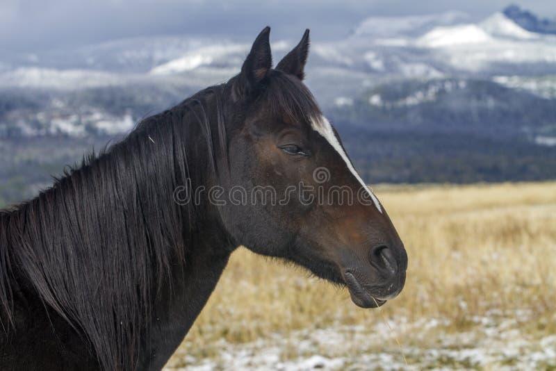 Cavalo do rancho de Wyoming, neve em montanhas fotografia de stock royalty free