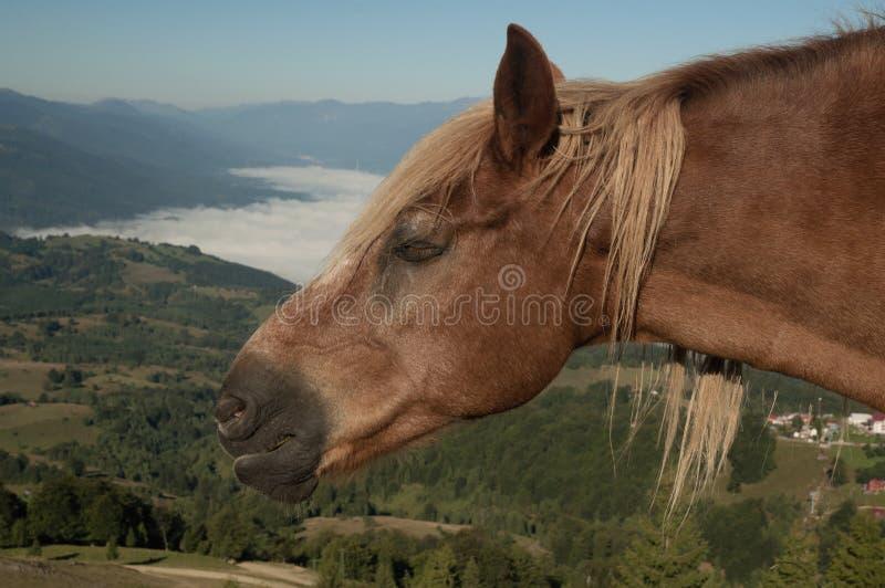 Cavalo do sono imagens de stock