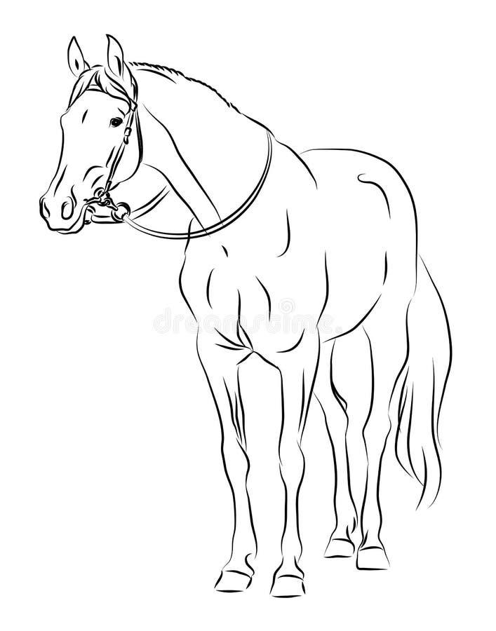 Cavalo do vetor com breio ilustração royalty free
