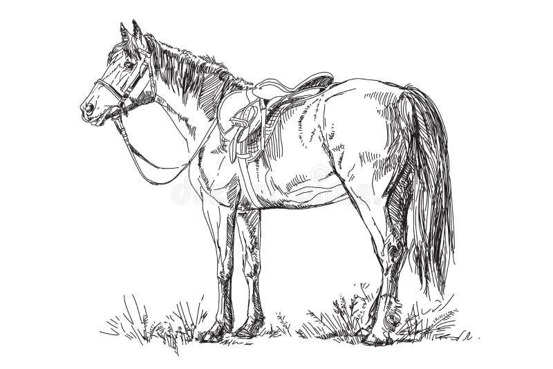 Cavalo do vetor com sela e freio ilustração stock