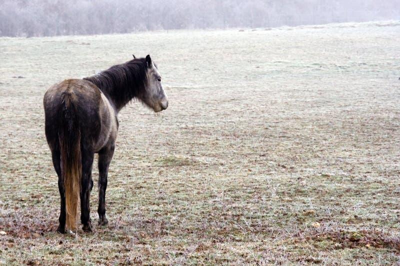 Cavalo do vintage imagens de stock