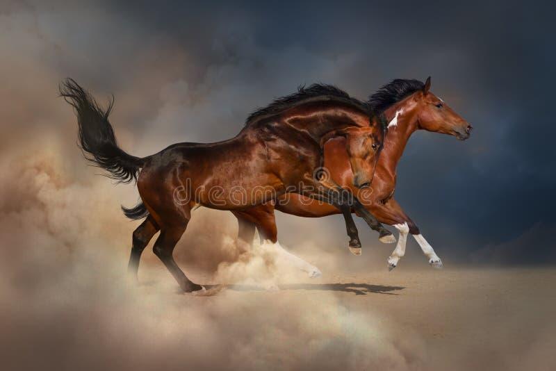 Cavalo dois fotografia de stock