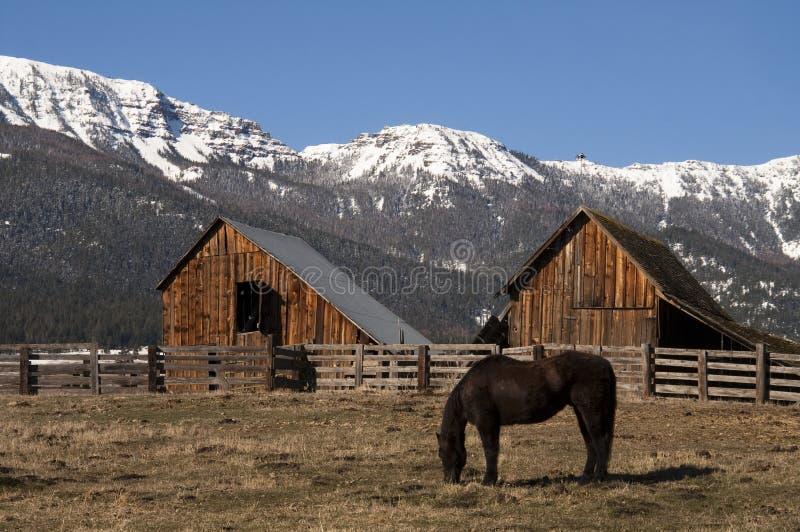 Cavalo dos rebanhos animais que pasta o inverno de madeira natural do rancho da montanha do celeiro fotos de stock