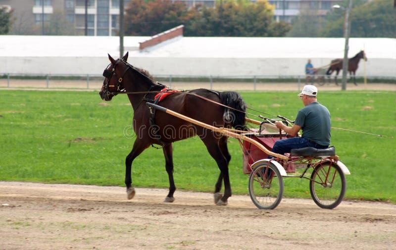 Cavalo e Buggy imagem de stock royalty free
