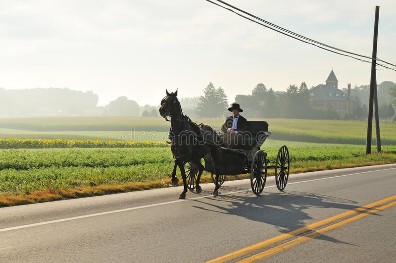 Download Cavalo e buggy de Amish foto de stock editorial. Imagem de rural - 80101693