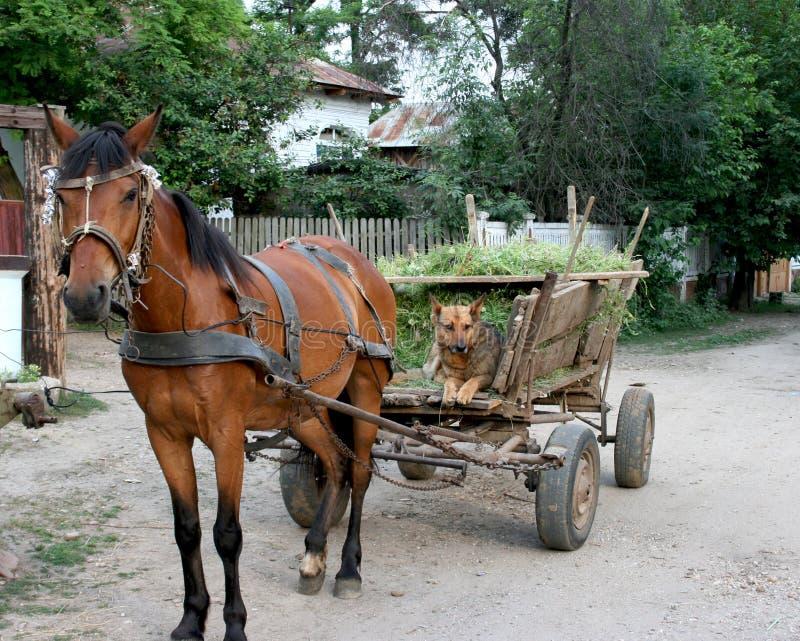 Cavalo e cão fotografia de stock royalty free