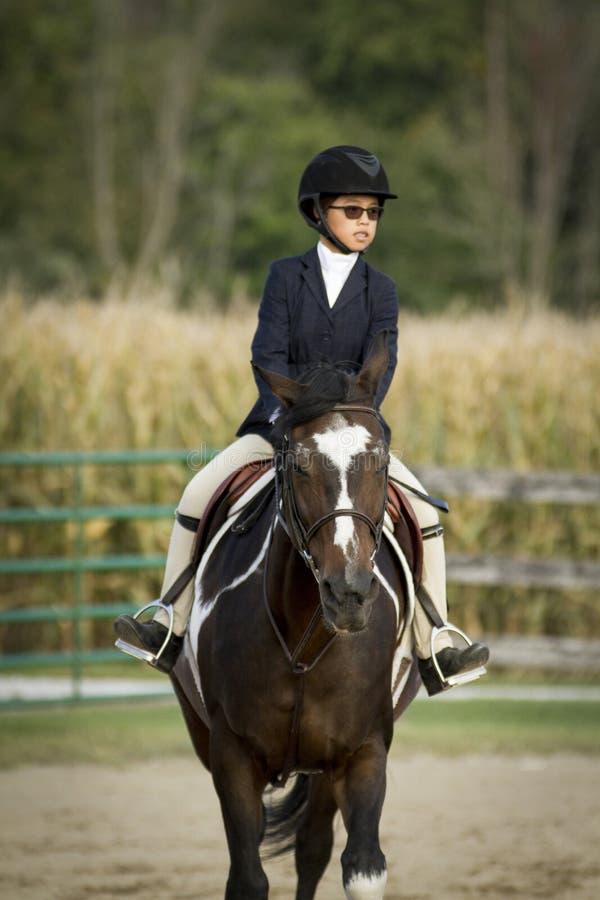 Cavalo e cavaleiro fotografia de stock royalty free