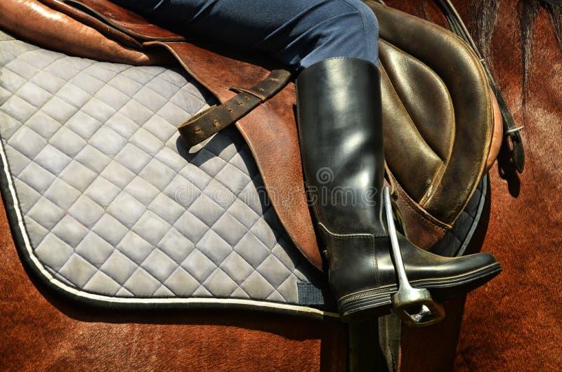 Cavalo e cavaleiro do adestramento fotografia de stock royalty free