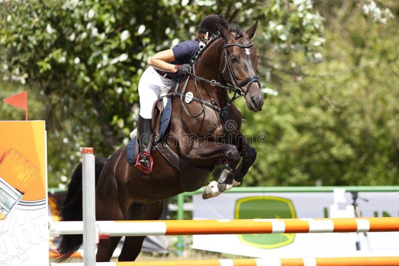 Cavalo e cavaleiro no curso do salto fotos de stock