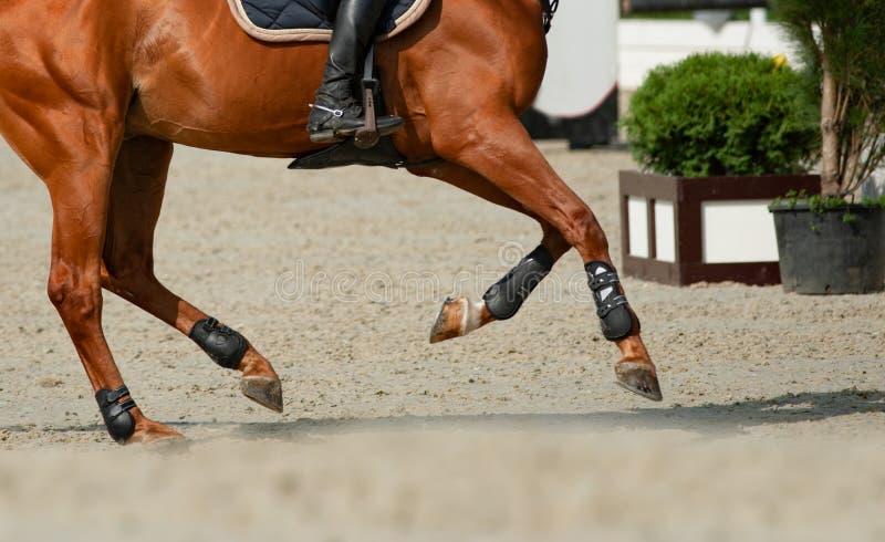 Cavalo e cavaleiro no movimento do galope imagem de stock