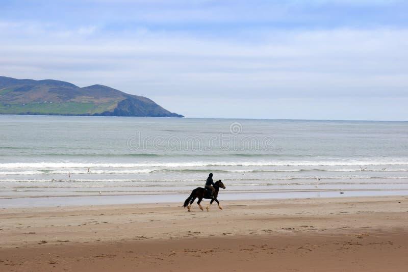 Cavalo e cavaleiro nos maharees imagem de stock