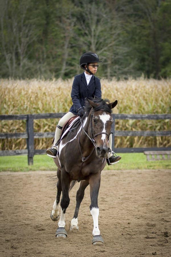 Cavalo e cavaleiro que cantering foto de stock royalty free