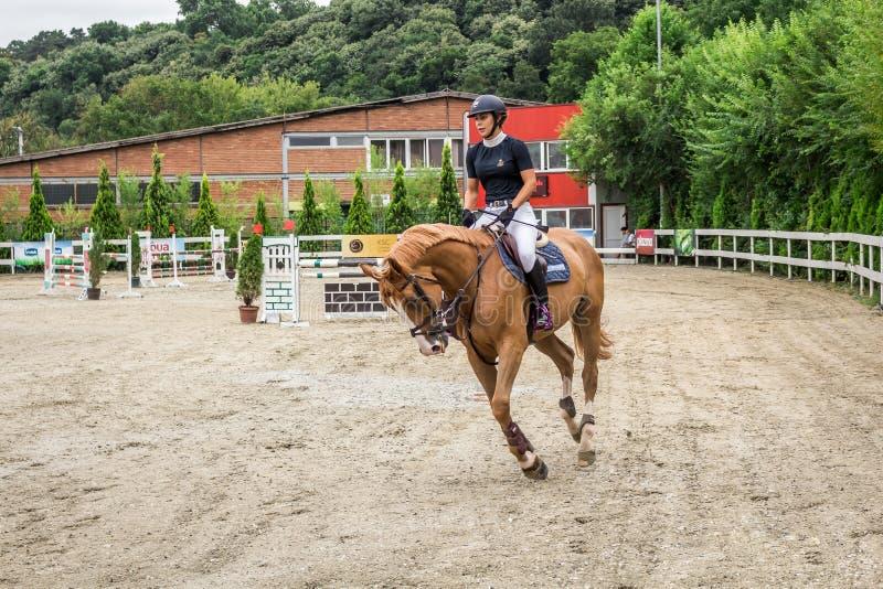 Cavalo e jokey bonitos na ação na trilha de corrida de cavalos com equipamento do obstáculo no hipódromo foto de stock royalty free