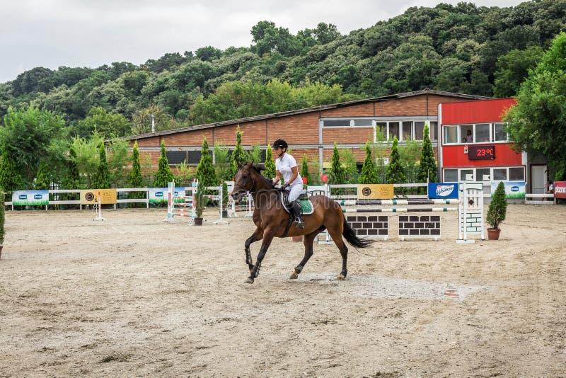 Cavalo e jokey bonitos na ação na trilha de corrida de cavalos com equipamento do obstáculo no hipódromo imagem de stock