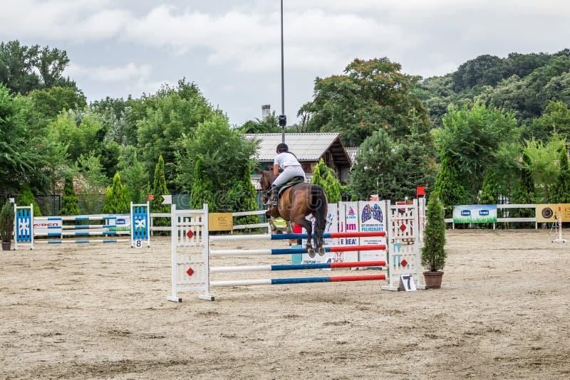 Cavalo e jokey bonitos na ação na trilha de corrida de cavalos com equipamento do obstáculo no hipódromo imagem de stock royalty free