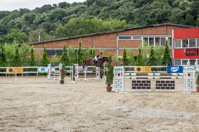 Cavalo e jokey bonitos na ação na trilha de corrida de cavalos com equipamento do obstáculo no hipódromo fotos de stock royalty free