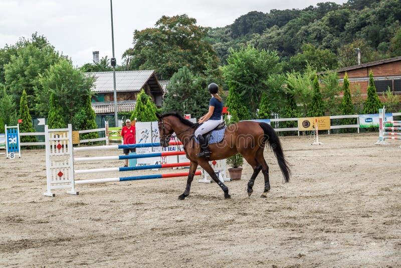 Cavalo e jokey bonitos na ação na trilha de corrida de cavalos com equipamento do obstáculo no hipódromo imagens de stock royalty free