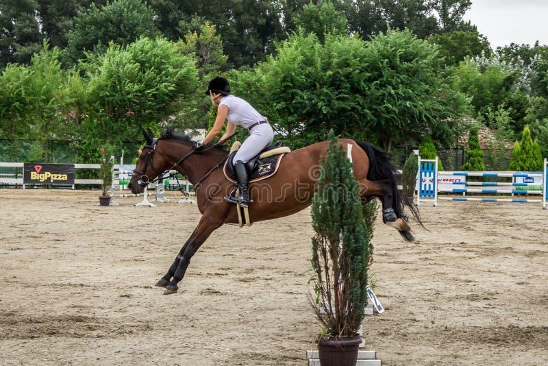 Cavalo e jokey bonitos na ação na trilha de corrida de cavalos com equipamento do obstáculo no hipódromo foto de stock