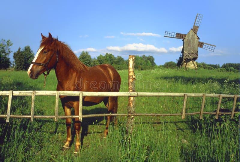 Download Cavalo Com Moinho De Vento. Imagem de Stock - Imagem de campo, verde: 29845749