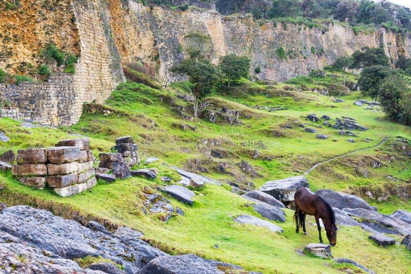 Cavalo e paredes de Kuelap foto de stock